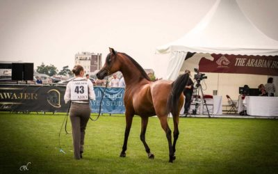 Breeders Cup Chantilly